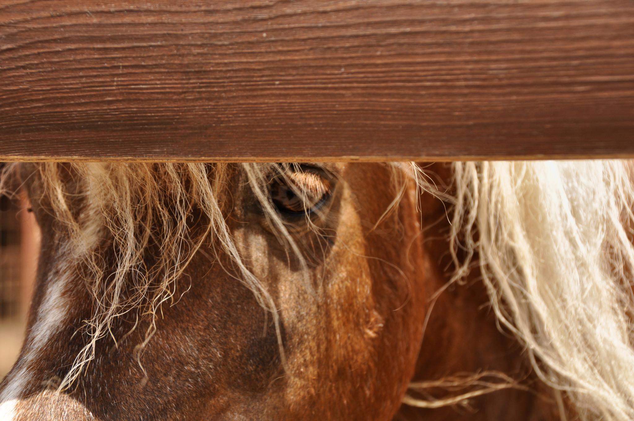 horse in Croatia
